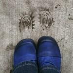 Fluevog footprints on a rainy Seattle day. #fluevog #vog_holly #Seattle